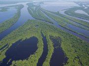 Amazon river negro - Anavilhanas archipelago- Amazon river negro - Anavilhanas archipelago - Parque Nacional de Anavilhanas