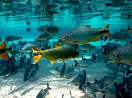 Travel Bonito - Snorkeling on fresh water