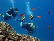 Fernando de Noronha - Scuba diving - Mergulho autônomo em Fernando de Noronha