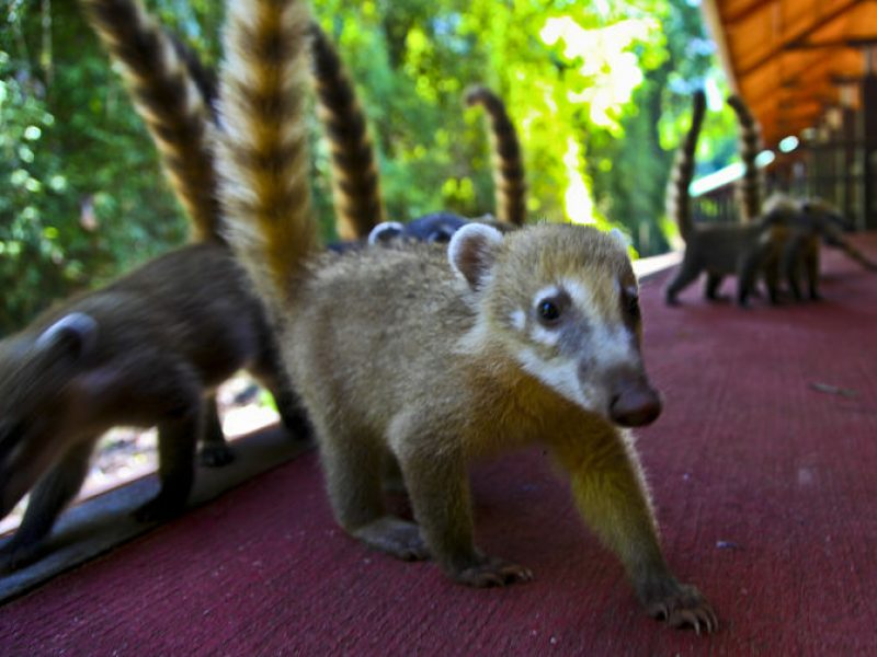 Private Brazilian park visit from any Hotel in Foz do Iguau