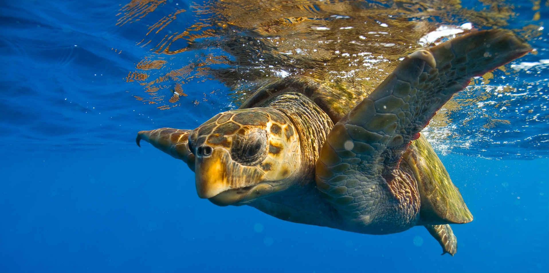 Praia do forte - Turtle